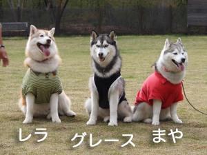 のまでぃっく2011/05/08